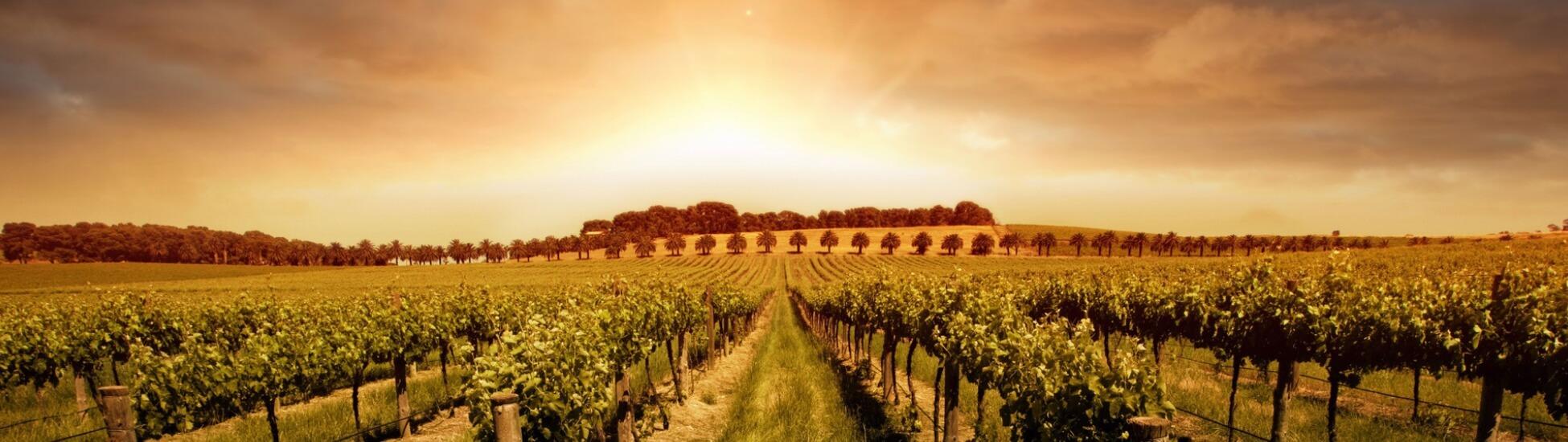 novap vinyards